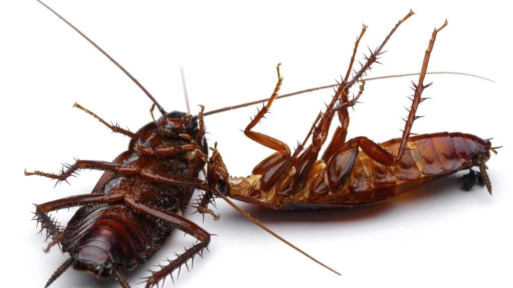 Погибшие тараканы
