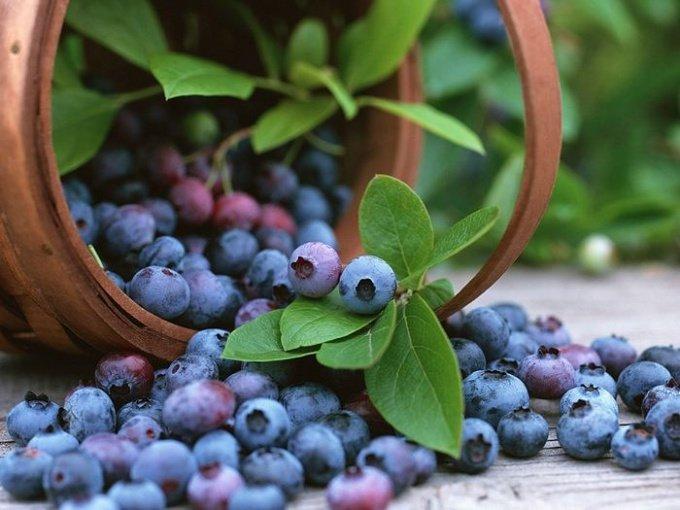 Как собирать ягоды в лесу