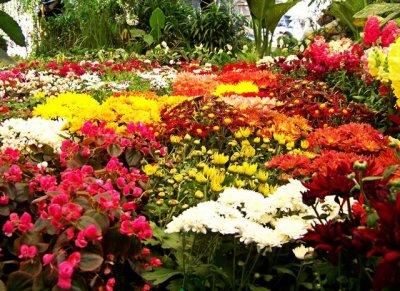 ❶ Как украсить клумбу цветами